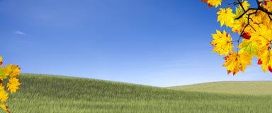 Łatwego obrazka jesieni krajobrazu piękny klonowy tło Obrazy Stock