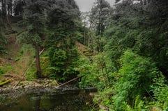 Łatwy strumień Obraz Royalty Free
