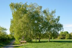 Ławek drzew pole fotografia stock
