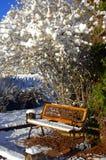 Ławka śnieg Zakrywający Obraz Stock