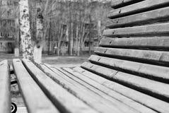 ławka czerń biały Drzewo Natura Park przespacerowanie obraz royalty free