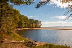 Ławka na brzeg opustoszały jezioro w jesień lesie czasem Piękni iglaści drzewa na brzeg obrazy stock