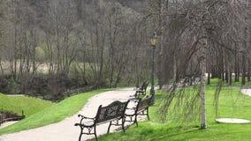 Ławka pod brzozy drzewa ruchem w wiatrze w wiosna parku 4K zbiory