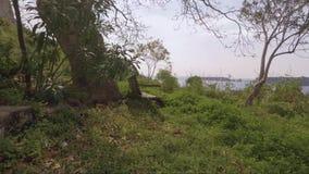 Ławka pod drzewem z widokiem zbiory wideo
