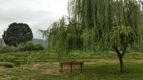 Ławka pod płacze wierzbowym drzewem Zdjęcia Stock