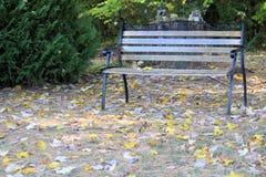 Ławka Umieszczająca w cieniu w parku Zdjęcia Stock