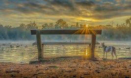 Ławka w świetle słonecznym Fotografia Stock