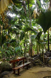 Ławka w dżungli, Vallee De Mai obrazy royalty free