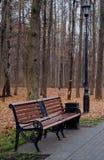 Ławka w jesień lesie Zdjęcie Stock