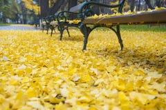 Ławka w jesień parku Fotografia Royalty Free