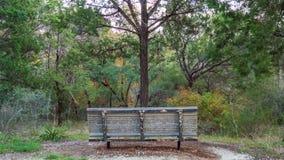 Ławka w lasowym śladu parku stawia czoło pojedynczy drzewny narastającego właśnie przed nim, z lasem dalej obrazy royalty free