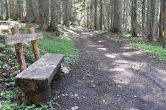 Ławka w lesie i lasowym śladzie Zdjęcia Royalty Free