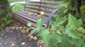 Ławka w miastowym parku w jesieni wolny HD zdjęcie wideo