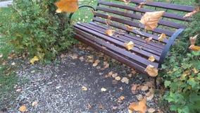 Ławka w miastowym parku w jesieni wolny HD zbiory wideo