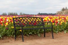 Ławka w tulipanu polu Obrazy Royalty Free