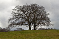 ławki dramatyczny osamotniony nieba drzewo Zdjęcie Stock