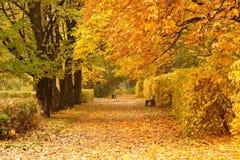 ławki parkują drogę zdjęcie royalty free