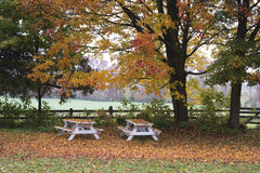 Ławki w Jesień Obrazy Stock