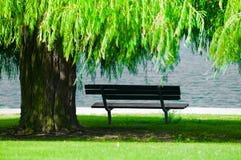 ławki wierzba parkowa płacząca zdjęcie stock