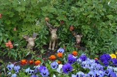 Łoś amerykański i kwiaty fotografia royalty free