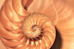 Łodzik skorupy Fibonacci symetrii przekroju poprzecznego spirali struktury wzrostowy złoty współczynnik fotografia royalty free