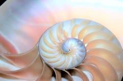 Łodzik skorupy Fibonacci symetrii przekroju poprzecznego spirali struktury wzrostowy złoty współczynnik obrazy royalty free