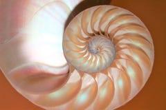 Łodzik skorupy Fibonacci symetrii przekroju poprzecznego spirali struktury wzrostowy złoty współczynnik zdjęcia stock