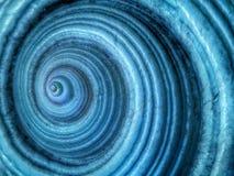 Łodzik skorupy zbliżenie jako tło wzór zdjęcia stock