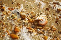 Łodzika pompilius denna skorupa na otoczak plaży Obrazy Stock
