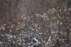 Łopian z suchymi gałąź na pięknym tle Obraz Royalty Free