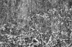 Łopian z suchymi gałąź na pięknym tle Zdjęcie Stock