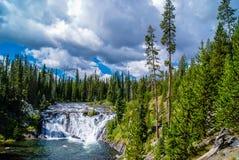 Łosiów amerykańskich spadki, Yellowstone park narodowy fotografia stock