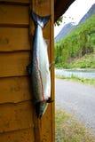 Łosoś w Norway Fotografia Royalty Free