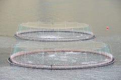Łososia gospodarstwa rolnego ryba sieć Fotografia Royalty Free