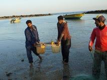 Łowiący przy Hengam wyspą, Iran Obraz Royalty Free
