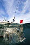 Łowić Dla giganta Trevally - Strzelający Obraz Royalty Free