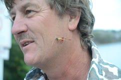 Łowić komarnicy w twarzy Fotografia Stock