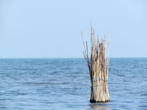 Łowić przy morzem Obraz Royalty Free