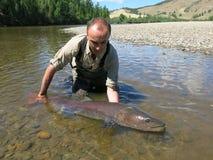 Łowić - taimen ryba Zdjęcie Royalty Free