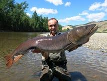 Łowić - taimen ryba Obrazy Royalty Free