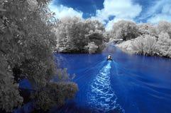 Łowić w mangrowe Zdjęcia Stock