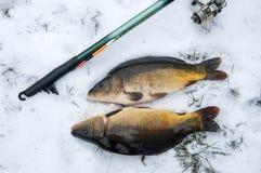 Łowić w zima karpiu łapiącym w śniegu Zdjęcia Royalty Free