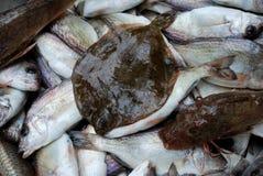 łowi świeżego zdjęcie royalty free