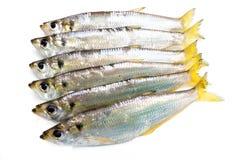 łowi świeżego Fotografia Stock