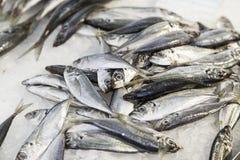 łowi świeżego rynek Fotografia Royalty Free
