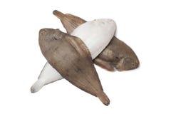 łowi świeżej podeszwy Obraz Stock