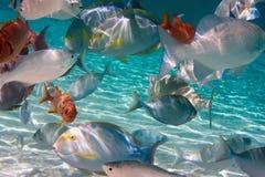 łowi mały tropikalnego Zdjęcia Royalty Free