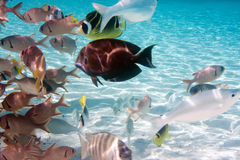 łowi mały tropikalnego Zdjęcie Royalty Free
