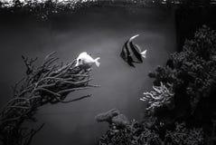 Łowi pod wodą, denna scena, bezbarwna fotografia stock