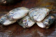 Łowi przy sławnym rybim rynkiem w Darze es Salaam, Tanzania obrazy royalty free